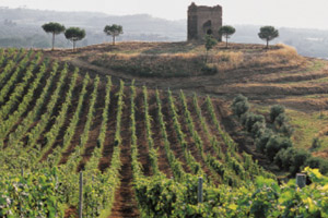 Chianti wine tour in Tuscany